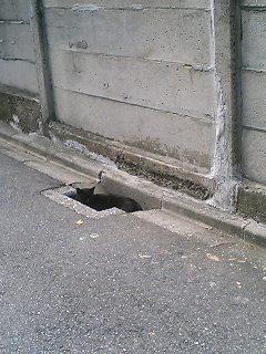 この写真の中に猫が隠れているよ! さがしてみよう!!